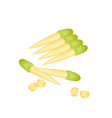 Stack of Fresh Baby Corns on White Background vector image