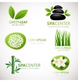 Natural signs with leaves flowers and grass vector image