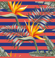 exotic flowers with leaves stripe background vector image vector image