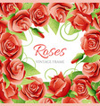 red rose frame vector image