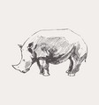 rhinoceros hand drawn a sketch vector image vector image