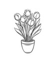 tulips in a pot vector image