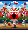 Circus animal show and acrobat performance at the