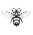 engraving insect vector image vector image