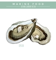Oyster Marine Food vector image vector image