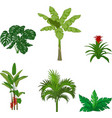 set tropical plants on white background vector image