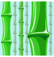bamboo pattern vector image vector image