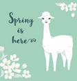 cute cartoon llama character with cherry tree vector image