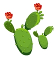 Cactus with flower isolated vector image vector image