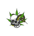 hand drawn skull cannabis leaf and snake logo desi vector image