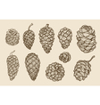 Pine cones of cedar spruce fir christmas tree vector image vector image