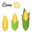 set of fruit and vegetable corn vector image vector image