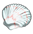 scallop shell isolated on white background vector image vector image