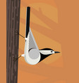 white wagtail vector image vector image