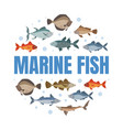 marine fish banner template with fishes pattern of vector image vector image