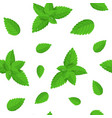 realistic detailed fresh green mint leaves vector image vector image