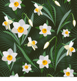 Seamless background from narcissus vector image vector image