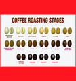 set coffee beans realistic or various stage vector image vector image