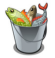 a stainless steel bucket filled with colorful fish vector image