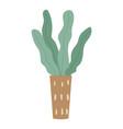 plant growing in pot or planter green indoor vector image vector image