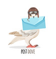 post dove in vintage helmet that holds envelope vector image vector image