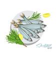 sprat sketch fish icon isolated marine vector image vector image