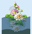 bouquet waterlily hand draw in water vector image