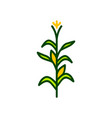 corn tree icon vector image