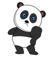 panda with blue eyes on white background vector image vector image