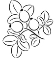 Rose-hips vector image