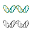 Set of two DNA symbols on white background vector image