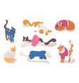 various cats in clothes good for christmas vector image