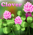 Blooming pink flowers on green field clover meadow vector image vector image