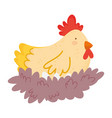 hen chicken with eggs in nest farm animal vector image