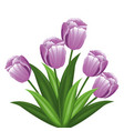purple tulip flowers decoration vector image vector image