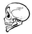 skull4black vector image vector image