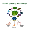 The composition of the cabbage Useful properties vector image