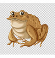 Toad with brown skin vector image
