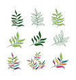 tropical leaf icon design vector image vector image