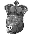 design dog with crown in white vector image