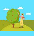 farmer gathering apples female vector image vector image