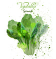 spinach salad leaves watercolor delicious vector image