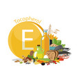 vitamin e or tocopherol food sources vector image