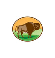 American Bison Oval Woodcut vector image vector image