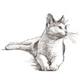 lying cat vector image