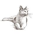lying cat vector image vector image