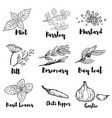 set of spice and herbs isolated on white vector image