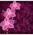 background with flower orchid invitation