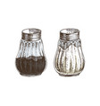 hand drawn salt and pepper shakers vector image