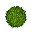 Round green bush vector image